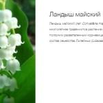 Аллея России -Марий Эл