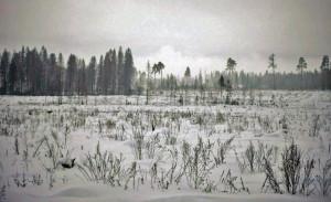 201х328 когда-то лес