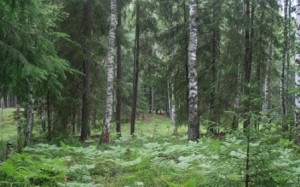 1376574594_forest-1