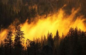 лесной-пожар-фото-с-сайта-adi19.ru_